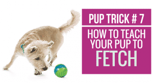 How to teach your pup to Fetch