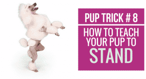 How to teach your pup to Stand on Hind Legs