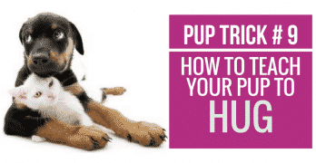 [Video] Pup Trick #9 – How to teach your pup to Hug