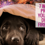 7 Ways to Protect Your Dogs During Fireworks